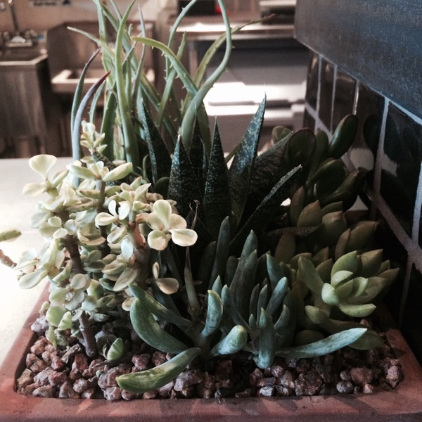 Succulents from neighboring local business LH Florist